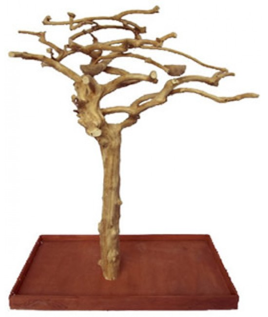 AE Java Wood Tree